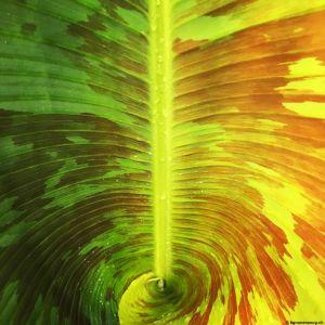 Banana-leaf-01